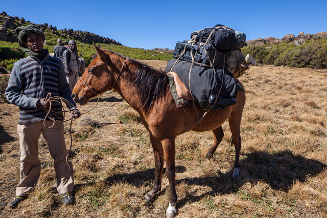 Step 6: Here you see the horse completely loaded with luggage and ready to depart. The total weight of items on this horse is about 40kg which is the maximum that such a packhorse is supposed to carry, an the one on this picture is loaded up to this limit. I have seen people riding horses in Bale Mountains, however. In such cases either the people are so light or the horses are different, i.e. bigger and stronger. Otherwise I can't explain how it is possible.